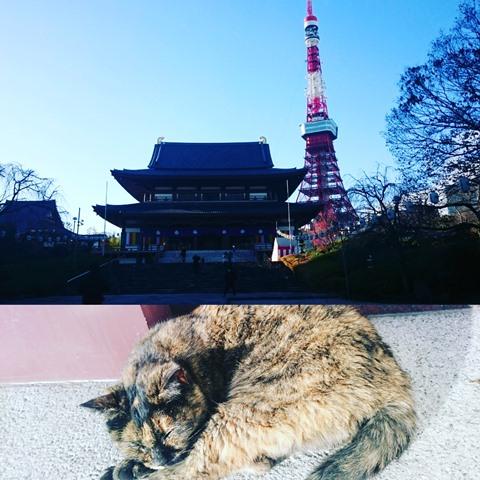 増上寺 猫