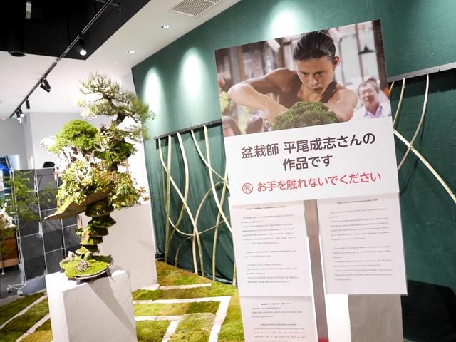 アコレおおみや 大盆栽まつり おおみや盆栽春まつり 平尾成志 まるまるひがしにほん 東日本連携センター