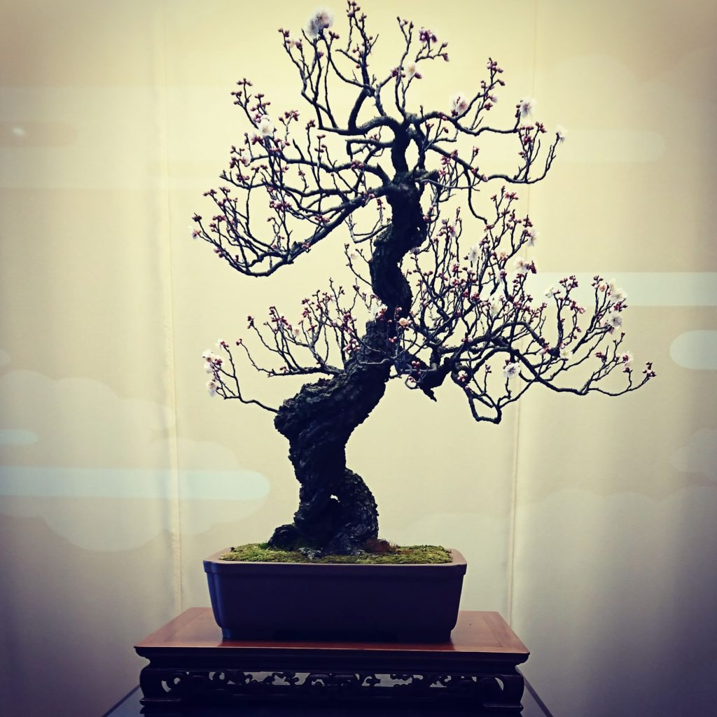 山田登美男 さいたま市 大宮盆栽美術館