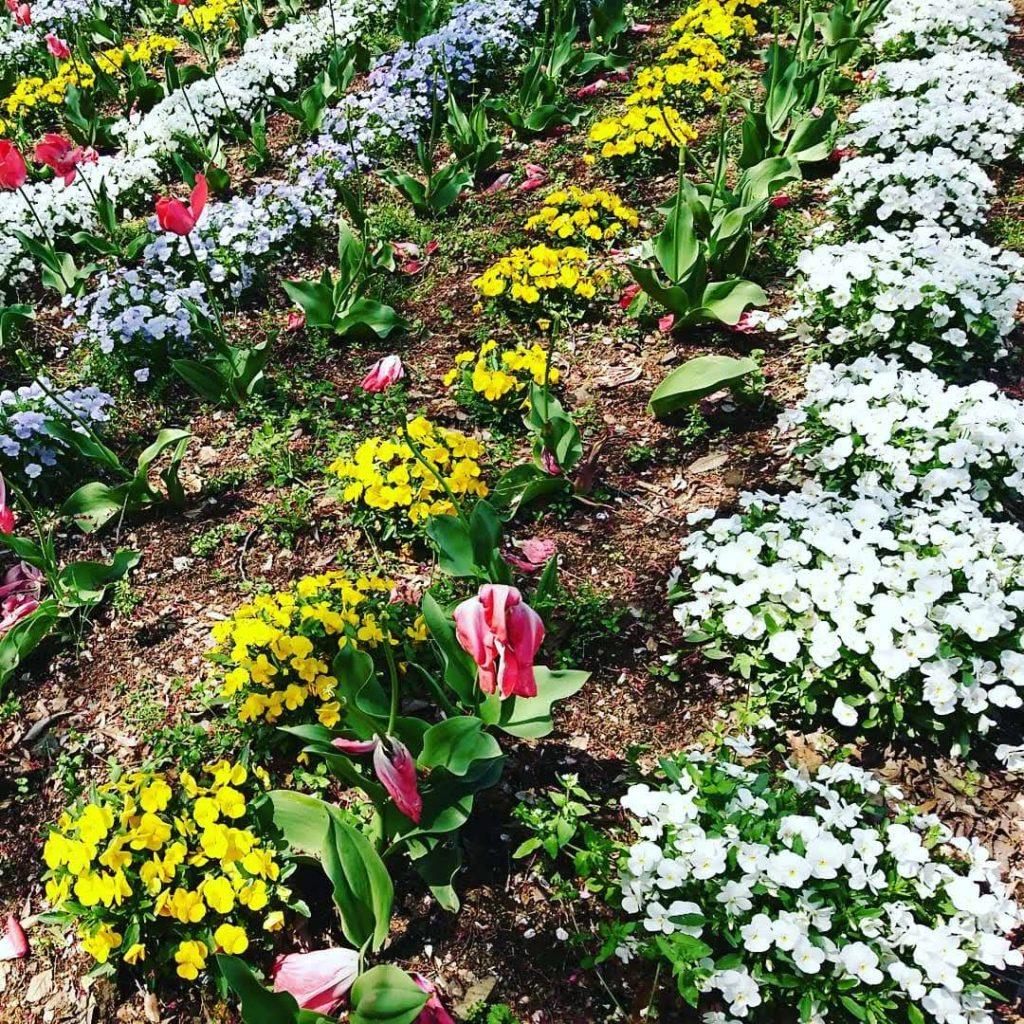 大宮花の丘農林公苑 チューリップ 花の丘公園 さいたま