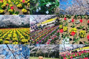 大宮花の丘農林公苑 大宮 花の丘