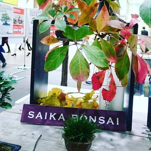 山田香織 彩花盆栽 清香園 盆栽 bonsai  大宮